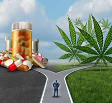 uso terapéutico del cannabis