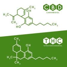 derivados del cannabis para el dolor de espalda