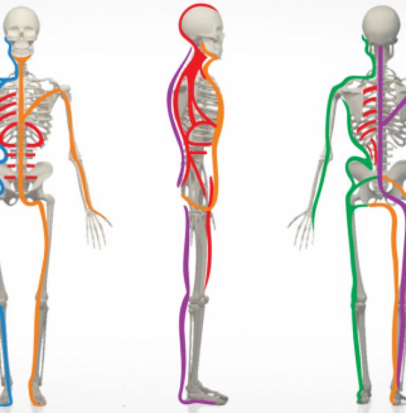 Diafragma y dolor de espalda al respirar