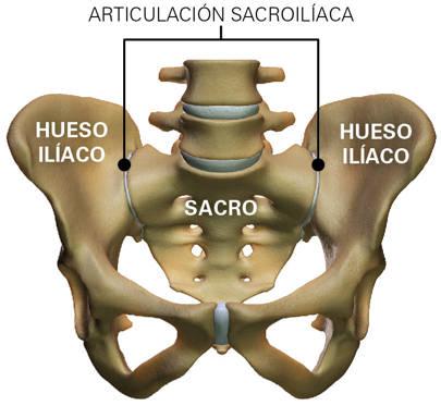 articulacion sacroilíaca