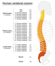equilibrio de la espalda