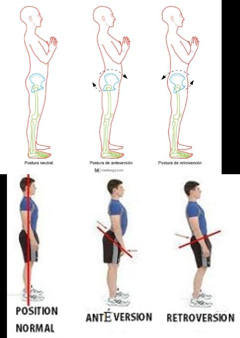como la postura pélvica afecta a la espalda